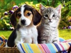 Animallandia - wszystko dla zwierząt
