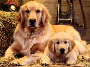 free_wallpaper_of_a_mother_dog_and_her_baby